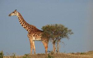 africal wildlife summer camp