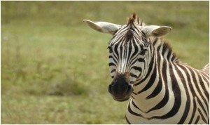wildlife photography kenya