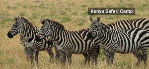 african wildlife camp