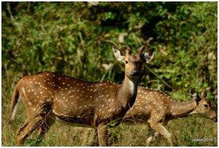 deer-01