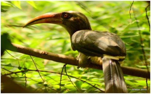hornbills01