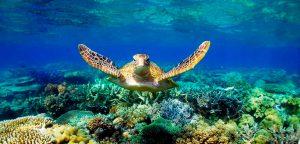 Maldives-Marine-Wildlife-Camp-image-1