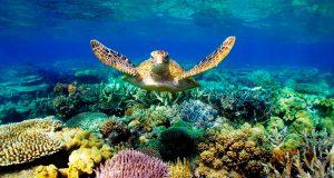 Maldives-Marine-Wildlife-Camp-image-2