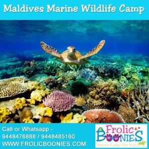 Maldives-Marine-Wildlife-Camp-image