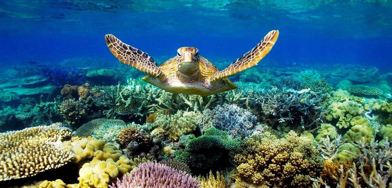 Maldives Snorkeling Camp